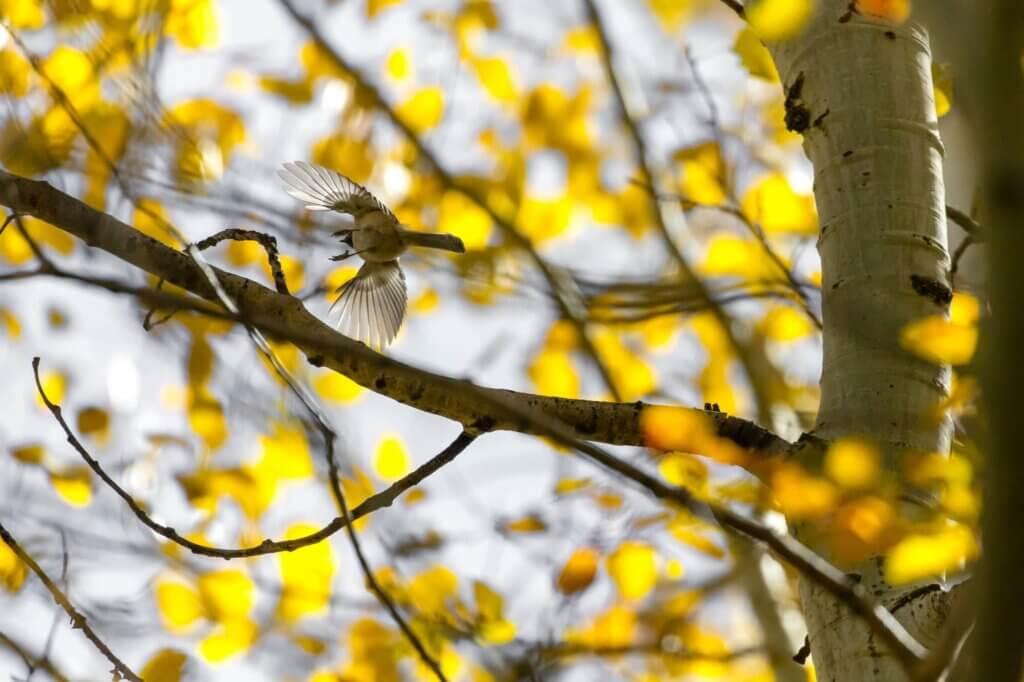 baum-vogel-arten